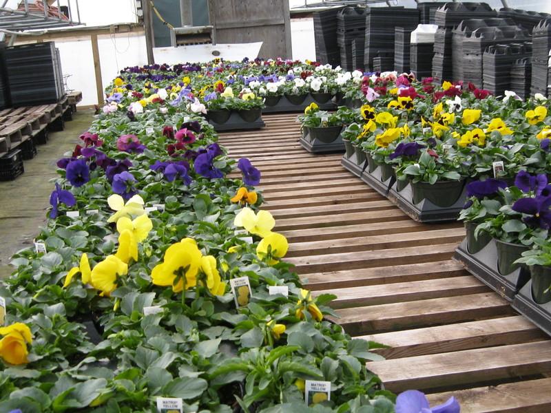 Warm weather spurs many to start planting   Cape Gazette