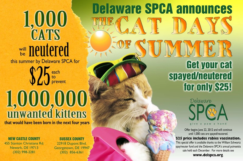 Delaware SPCA announces Cat Days of Summer spay/neuter