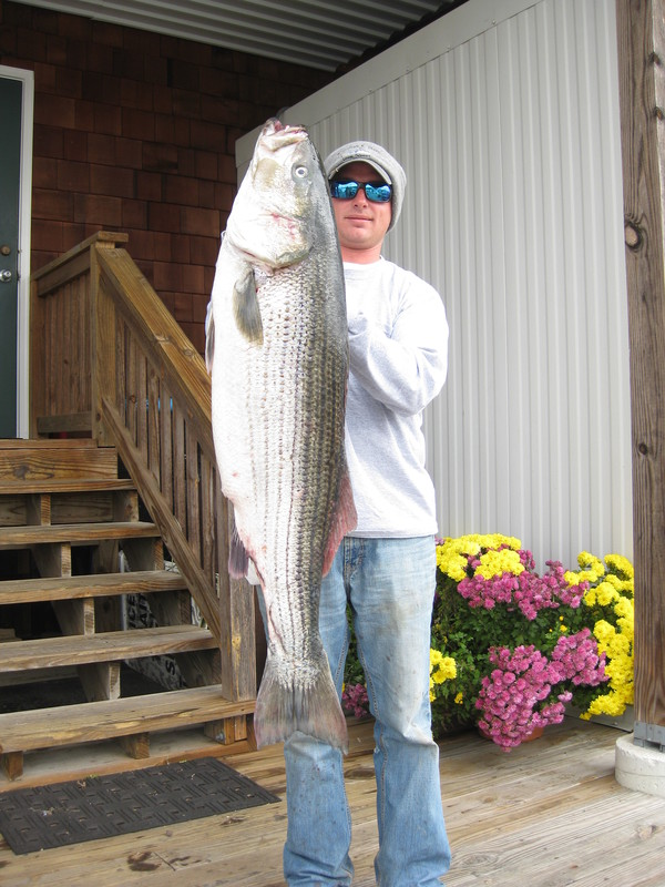 Anglers hooking tog rock since storm passed cape gazette for Lewes harbor marina fishing report