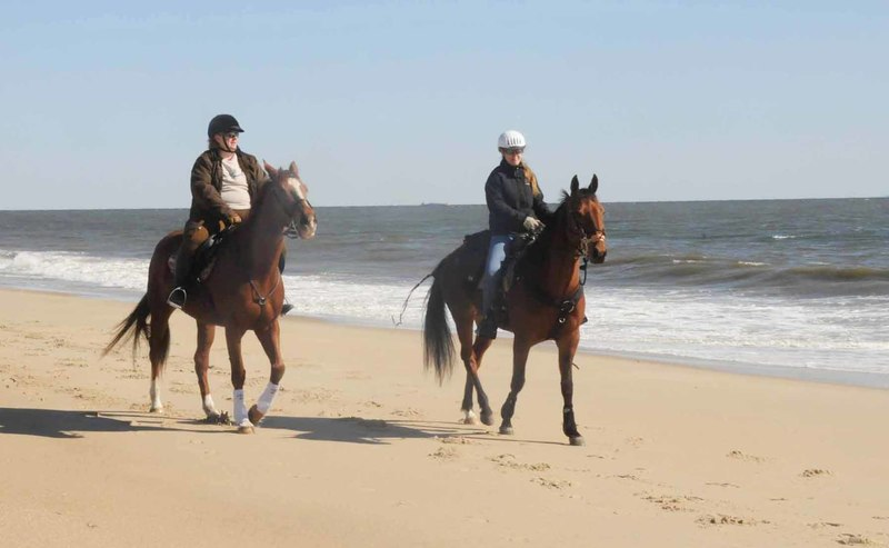 Beach Ride Nets 10 500 For Therapeutic Riding Group Cape