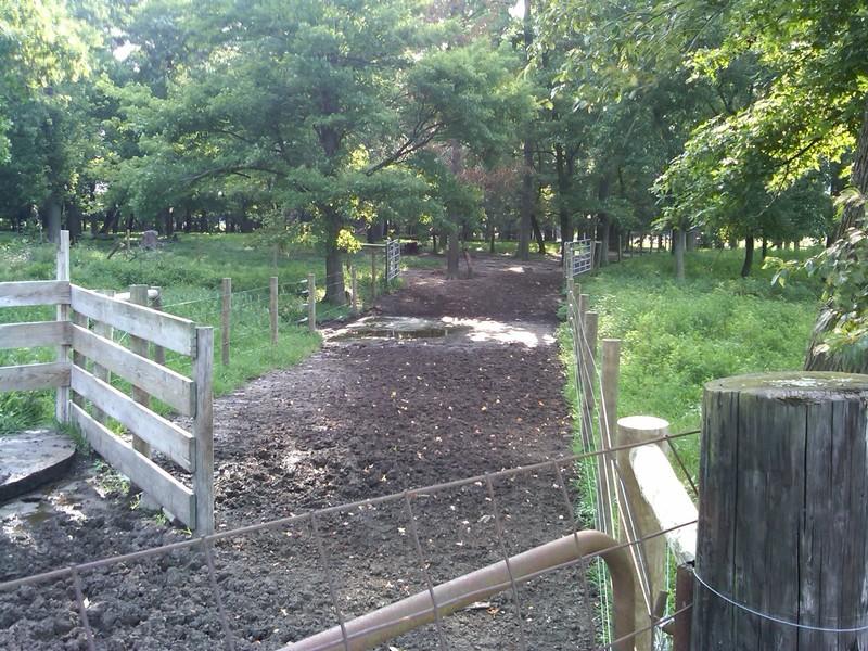 fences stream
