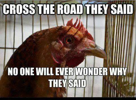 Why did the chicken cross the road??? | Cape Gazette