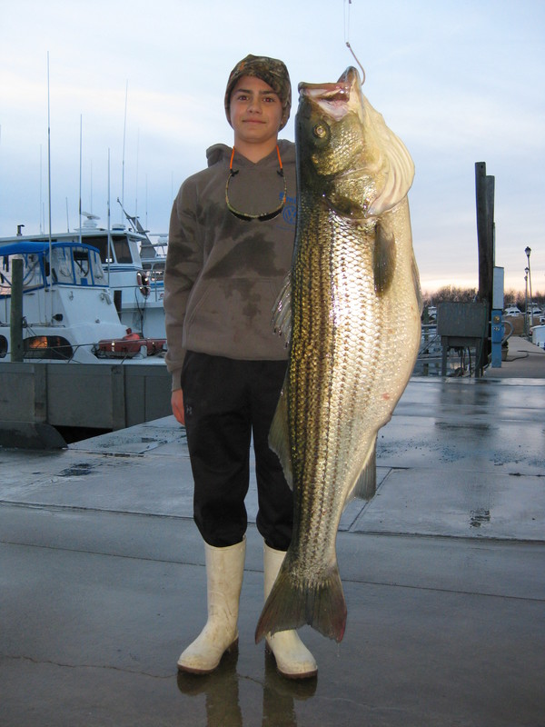 Rockfish are biting dnrec looks at increased fees cape for Striper fishing rigs