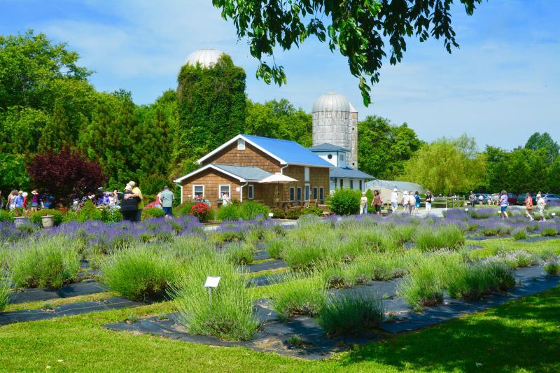 Visitors get up close to local farms, gardens   Cape Gazette