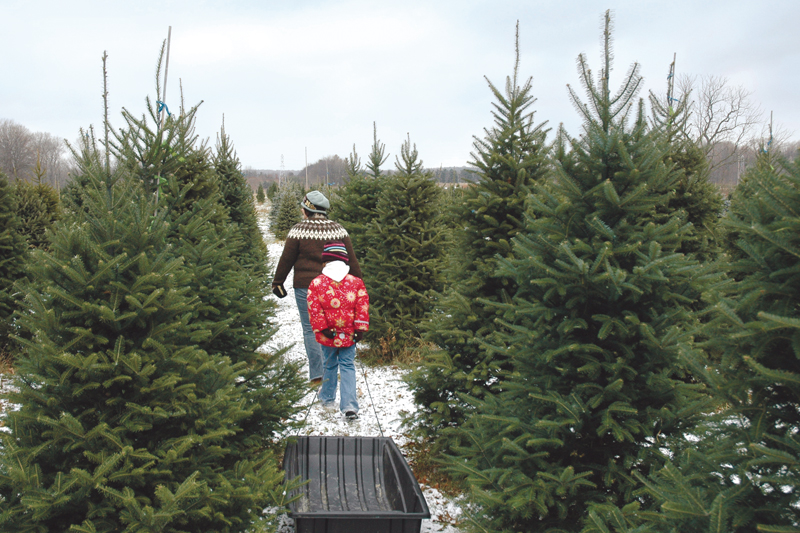 Local Christmas trees available from Delaware farms | Cape Gazette