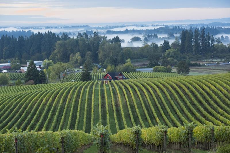 Oregon produces plenty of marvelous Pinot Noir | Cape Gazette