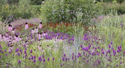 Delaware Botanic Gardens seeks funds for Meadow Garden | Cape Gazette