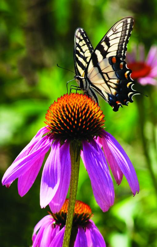 18 Summer Flowers That Can Take The Heat Cape Gazette