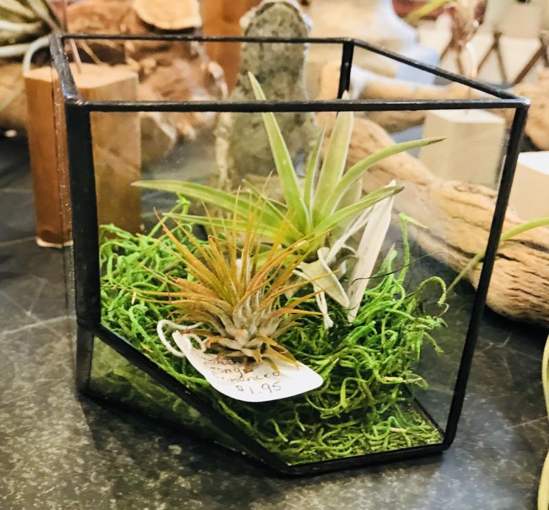Mother\'s Day Gift Ideas at Wharton\'s Garden Center | Cape Gazette