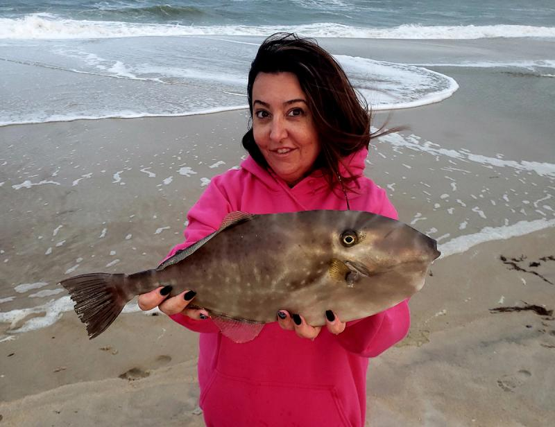 Unicorn filefish caught at Assateague Island | Cape Gazette