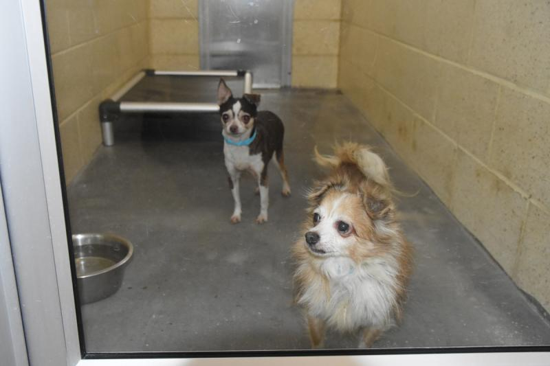SPCA accepts 44 dogs from one Dover home | Cape Gazette