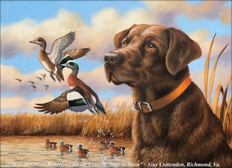 Udel Academic Calendar 2020-21 Delaware Waterfowl Stamp and Trout Stamp winners announced | Cape