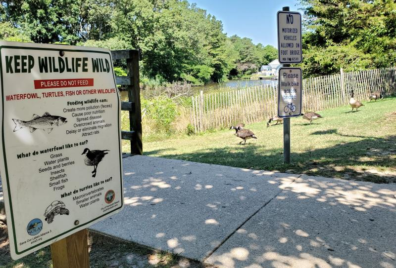 Don't feed the wildlife at Rehoboth's freshwater lakes
