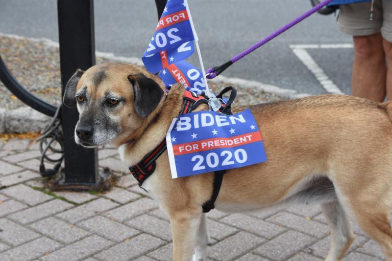 Biden dog parade down Second Street   Cape Gazette
