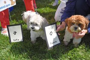 Agility Dog Training Delaware