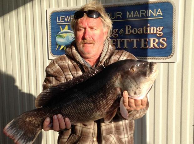 Tog and sea bass dominate the fishing cape gazette for Lewes harbor marina fishing report