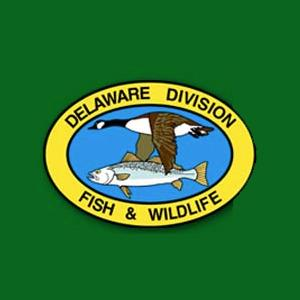 Dnrec Seeks Volunteers To Report Delaware Sightings Of